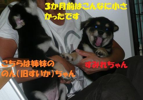 f0121712_1730251.jpg