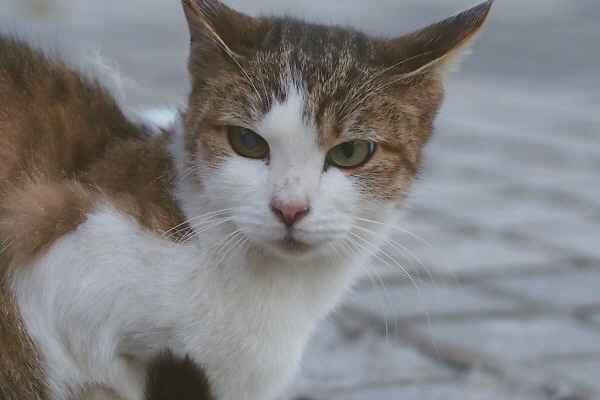 枯れすすきと美猫親子三代 _f0214527_2265490.jpg