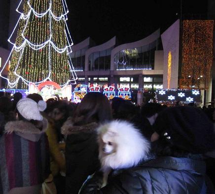 ちょっとクリスマス_b0177436_12451377.jpg