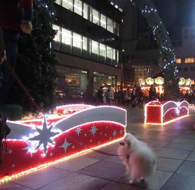 ちょっとクリスマス_b0177436_12453714.jpg