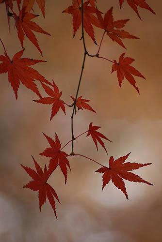 野鳥たちの水浴びと紅葉。ヒマラヤユキノシタ_f0030085_20465091.jpg