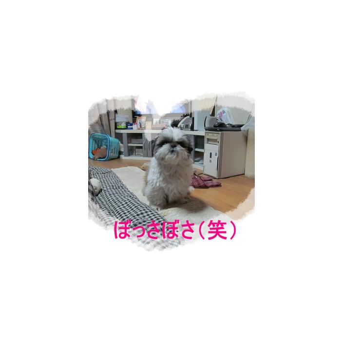 b0124693_837894.jpg