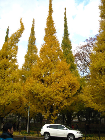 Honey Gold、、、の道_f0061394_9451348.jpg