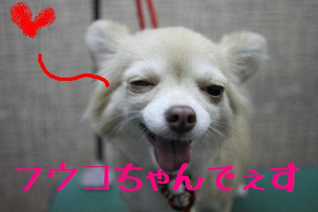 b0130018_0523976.jpg