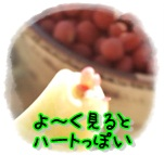 b0153121_11424427.jpg