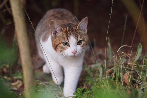枯れすすきと美猫親子三代 _f0214527_1151258.jpg