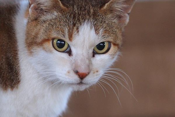 枯れすすきと美猫親子三代 _f0214527_2204841.jpg