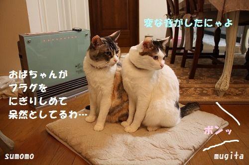 f0063729_1265461.jpg