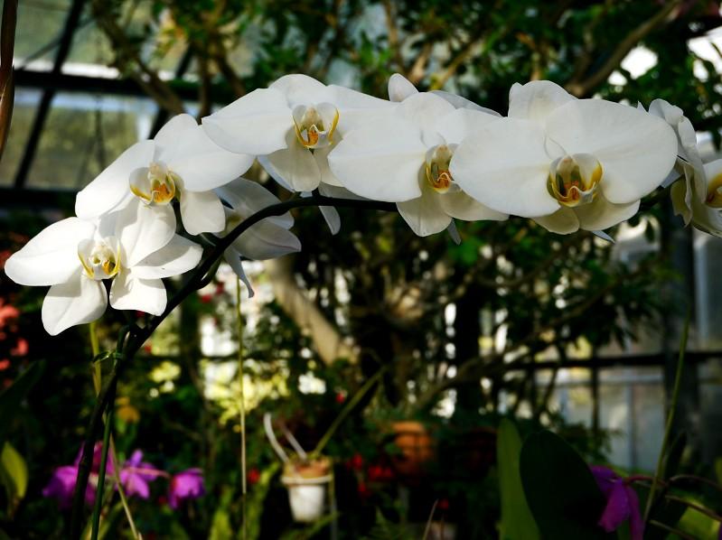 和歌山県植物公園緑花センター _b0093754_21403283.jpg