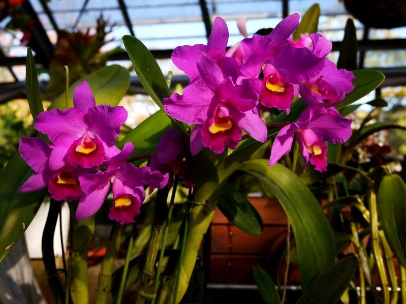 和歌山県植物公園緑花センター _b0093754_2141169.jpg