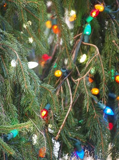 the 2012 rockefeller center christmas tree_c0180971_0501763.jpg