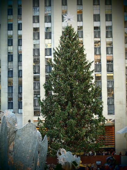 the 2012 rockefeller center christmas tree_c0180971_0502547.jpg