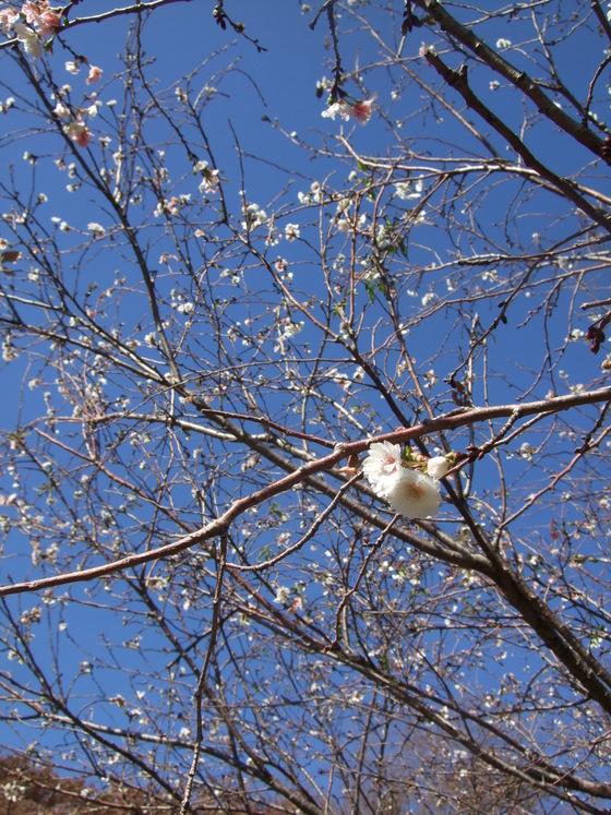 オークリーフ(毛利庭園)_f0049672_1624852.jpg