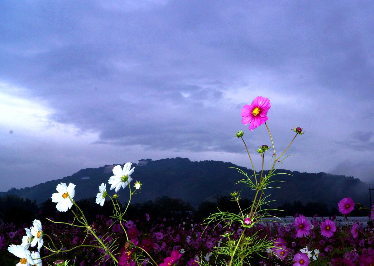 ミヤマホージロ 凄く綺麗です_e0254493_0162553.jpg