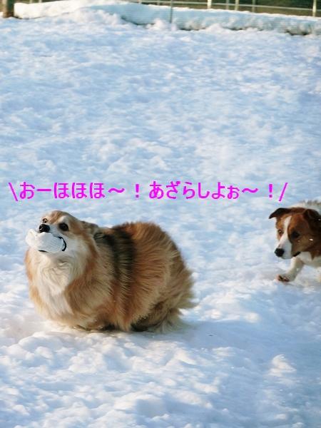 c0127703_159242.jpg