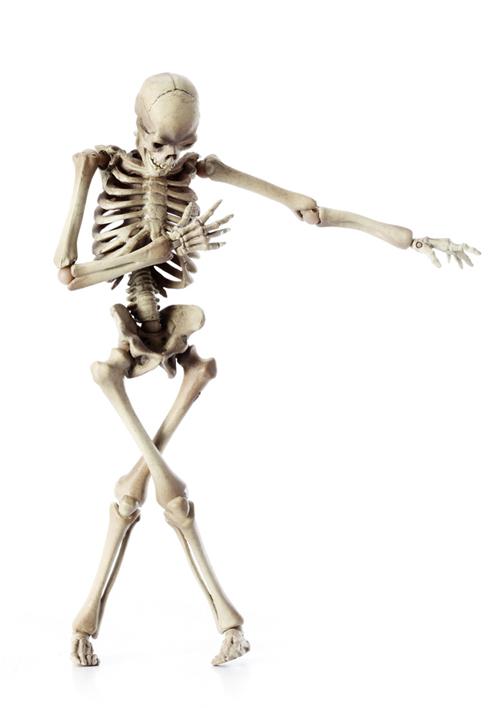 骸骨の偏愛_a0165018_2102088.jpg