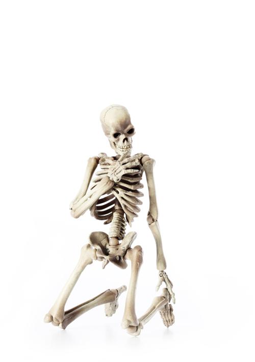 骸骨の偏愛_a0165018_2103527.jpg