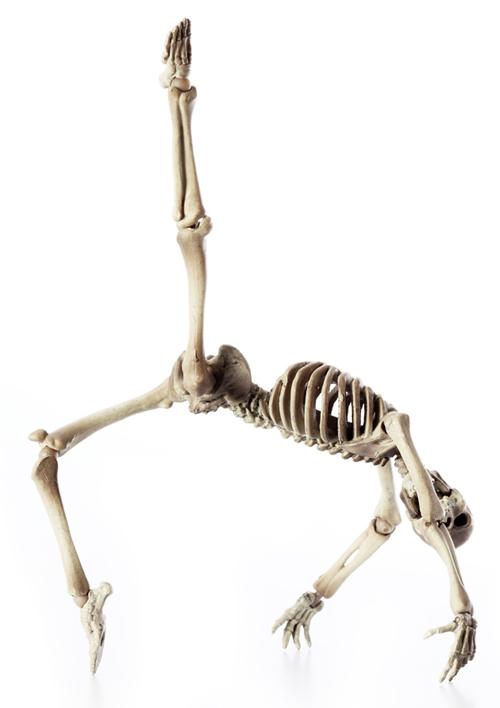 骸骨の偏愛_a0165018_210868.jpg