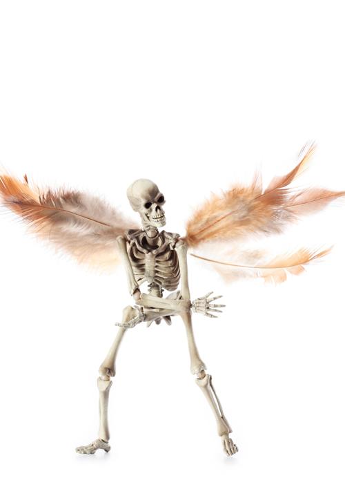 骸骨の偏愛_a0165018_211282.jpg