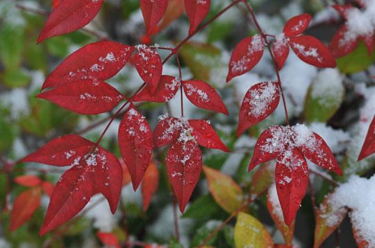 雪の候(1)_c0093046_842404.jpg