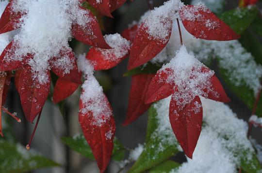 雪の候(1)_c0093046_8425986.jpg