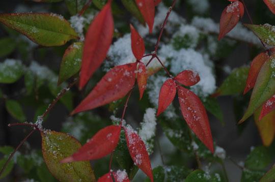 雪の候(1)_c0093046_84316100.jpg
