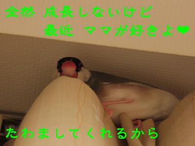 b0158061_20485578.jpg
