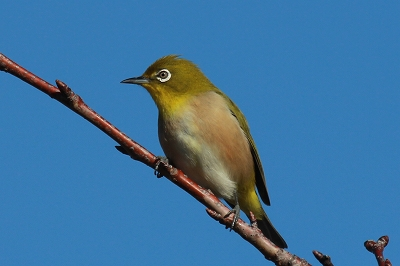 ★先週末の鳥類園(2012.12.15~16)_e0046474_1934312.jpg