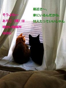 b0200310_10101921.jpg