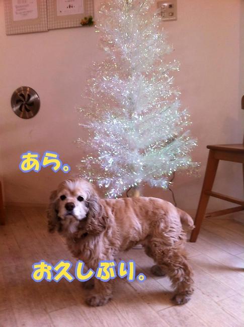b0067012_22201047.jpg