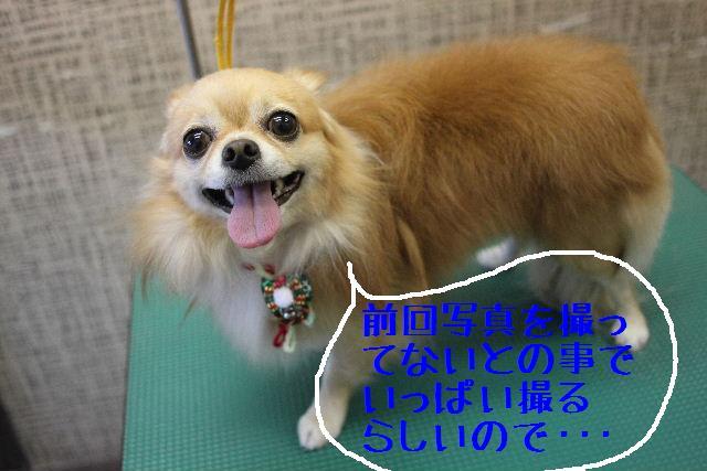 b0130018_0375540.jpg