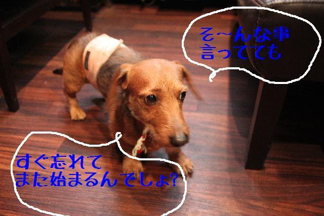 b0130018_0482063.jpg