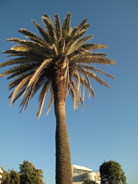 初冬の秋谷海岸散歩_d0150720_1044252.jpg