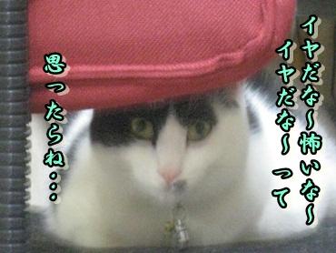 b0151748_1281047.jpg