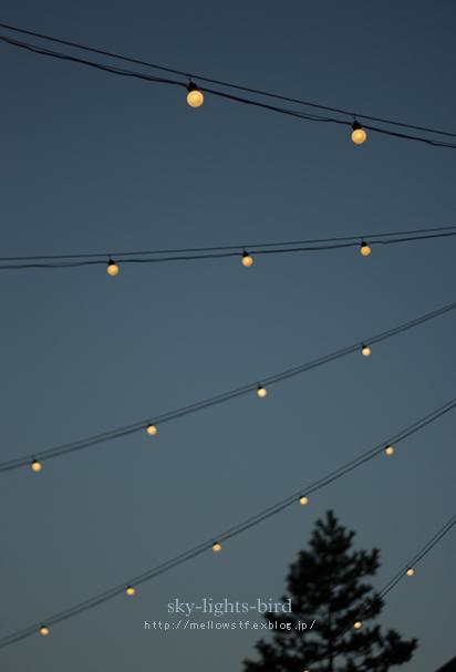 空と光と鳥。_d0124248_20462738.jpg
