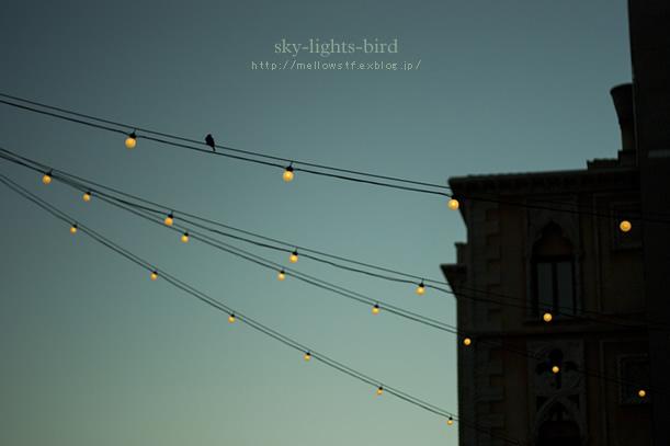 空と光と鳥。_d0124248_20491758.jpg