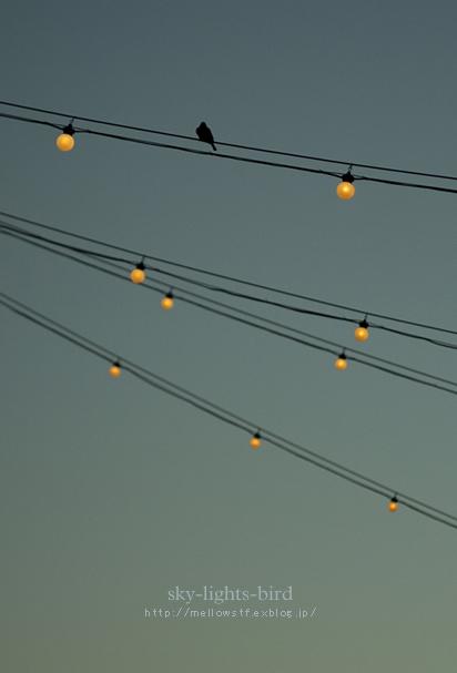 空と光と鳥。_d0124248_20504419.jpg