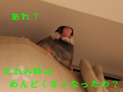 b0158061_22113831.jpg