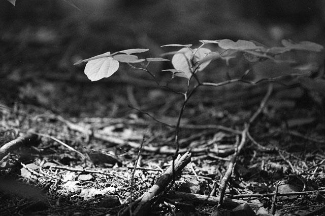 木曽谷を登る_e0126186_22351162.jpg