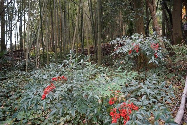 日本一の紅葉 教林坊、聖徳太子と教林坊、織田信長の魅力、お勧めしたい京都の紅葉、驚愕の安土教林坊①_d0181492_18214774.jpg