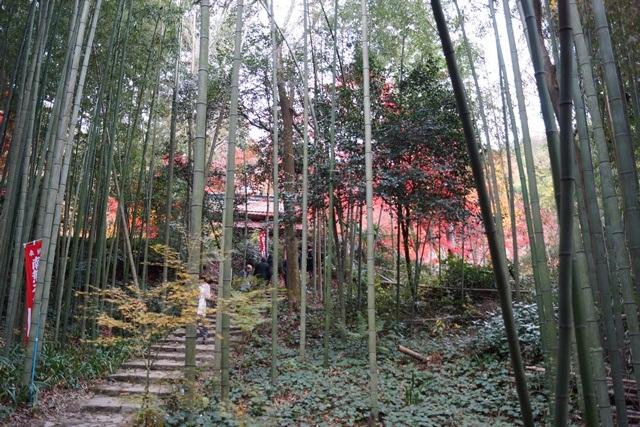 日本一の紅葉 教林坊、聖徳太子と教林坊、織田信長の魅力、お勧めしたい京都の紅葉、驚愕の安土教林坊①_d0181492_1822228.jpg