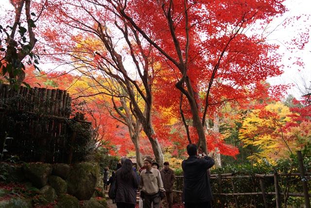 日本一の紅葉 教林坊、聖徳太子と教林坊、織田信長の魅力、お勧めしたい京都の紅葉、驚愕の安土教林坊①_d0181492_18223571.jpg