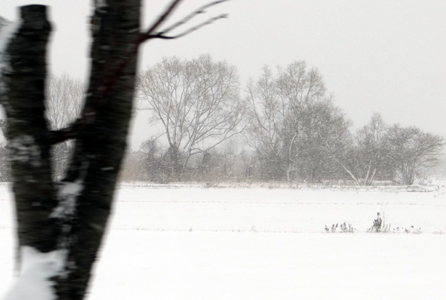 昨日の雪景色_a0136293_16505572.jpg