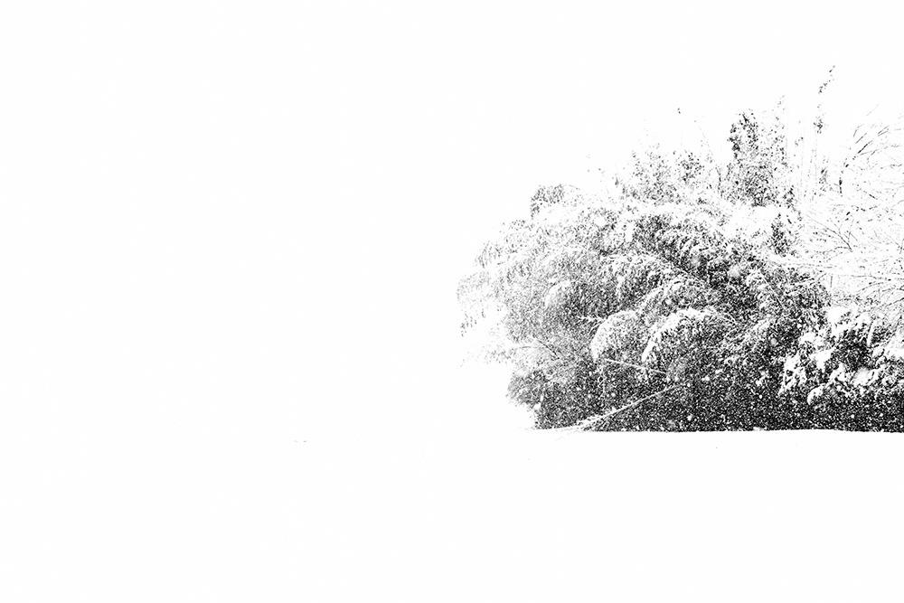 雪は白いものだから #LEICA M Monochrom_c0065410_20555737.jpg