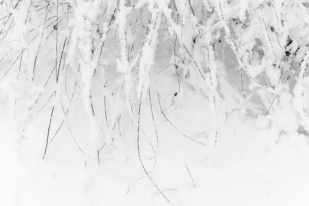 雪は白いものだから #LEICA M Monochrom_c0065410_20573536.jpg