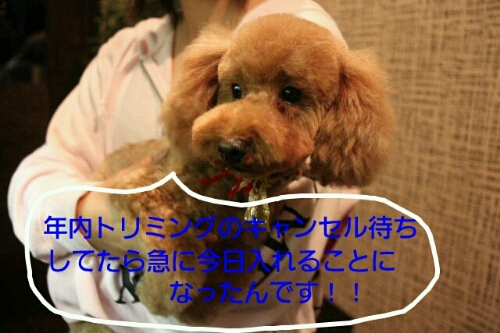 b0130018_8324429.jpg