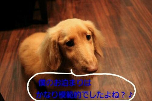 b0130018_8361536.jpg