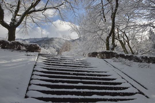 雪の候(3)_c0093046_1941658.jpg
