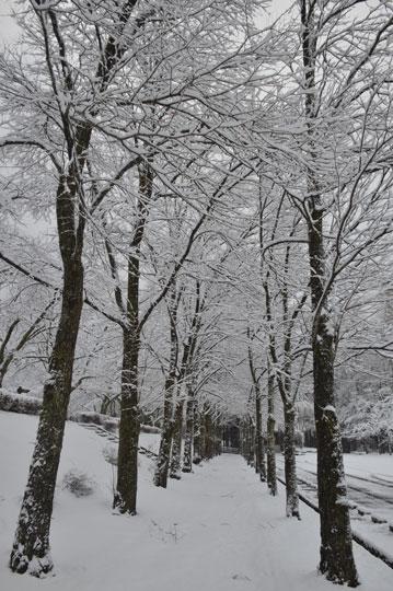 雪の候(3)_c0093046_1943226.jpg