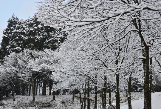 雪の候(3)_c0093046_1944736.jpg